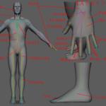 Mayaリギング:キャラクターにおける解剖学的ジョイント位置と方向付け
